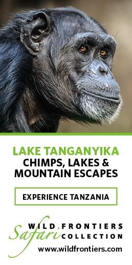 wild-frontiers-lake-tanganyika-chimps-mountain