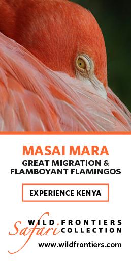 wild-frontiers-masai-mara