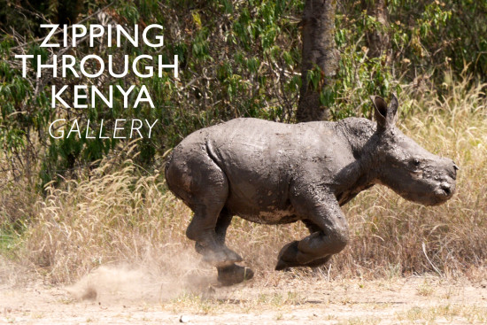 zipping-through-kenya-gallery
