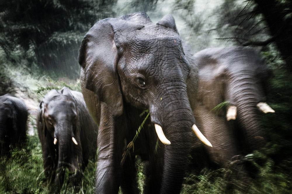 The issue of human-elephant conflict is an important one to consider ©Stuart Butler
