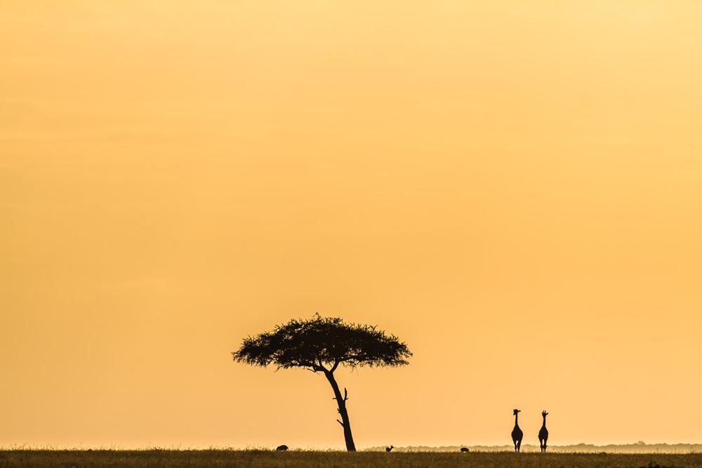 giraffe-silhouette-stuart-butler