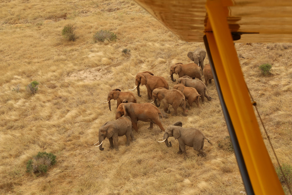 Aerial surveillance to check the health of a herd of elephants ©The David Sheldrick Wildlife Trust