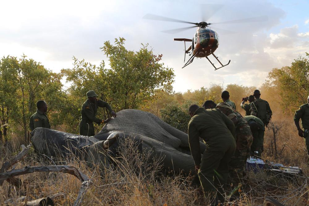 The DSWT KWS Vet Unit in action ©The David Sheldrick Wildlife Trust