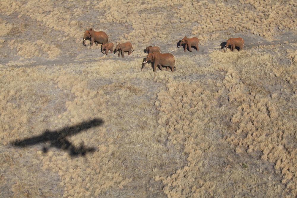 Keeping an eye on elephants ©The David Sheldrick Wildlife Trust