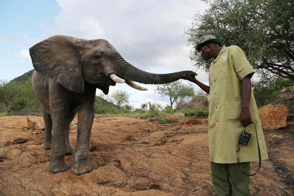 The head keeper at Ithumba Reintegration Unit ©The David Sheldrick Wildlife Trust