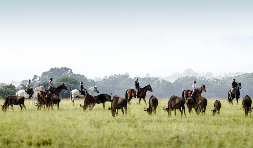 horse-safari-swaziland