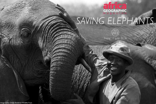 saving-elephants