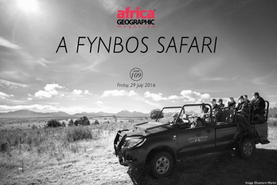 a-fynbos-safari