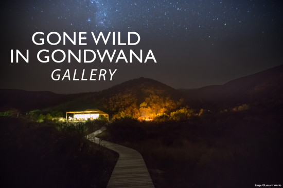 gone-wild-in-gondwana
