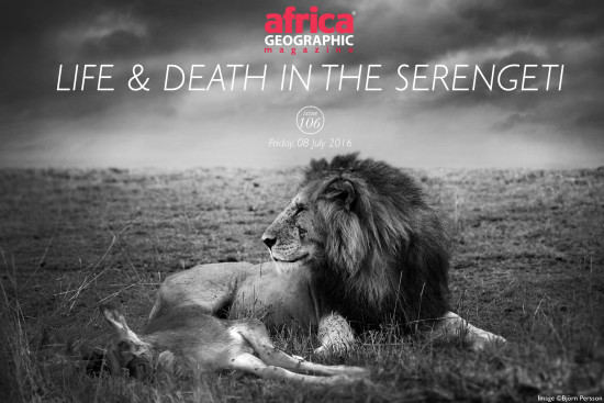 life-and-death-serengeti