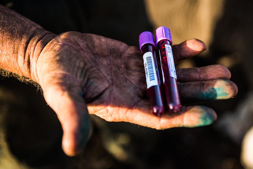 blood-samples-rhino-peter-chadwick