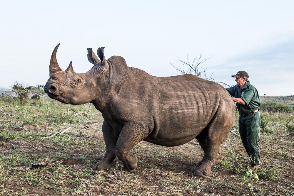 rhino-and-ranger-peter-chadwick