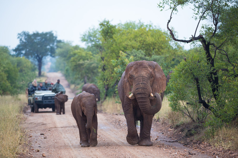 Following elephants on safari in a private game reserve ©Villiers Steyn