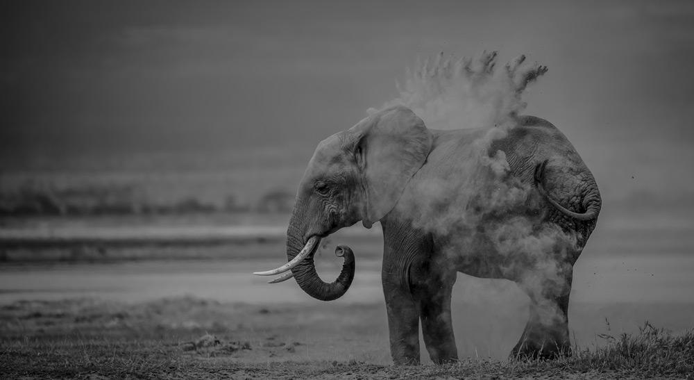 elephant-in-dust