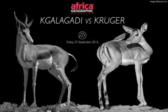kgalagadi-versus-kruger