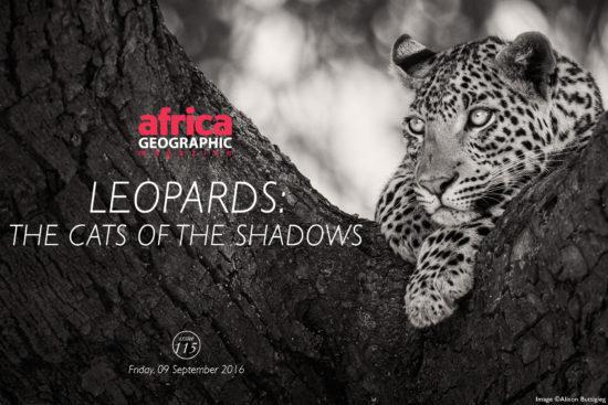 leopards-alison-buttigieg
