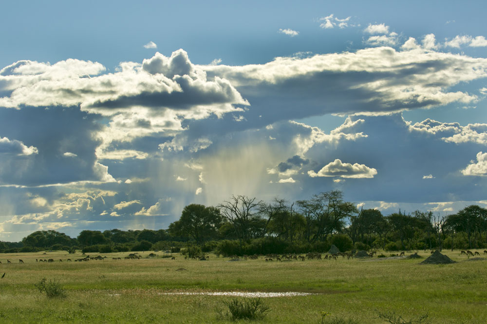 Rain transforms Hwange's dry landscape into lush grasslands