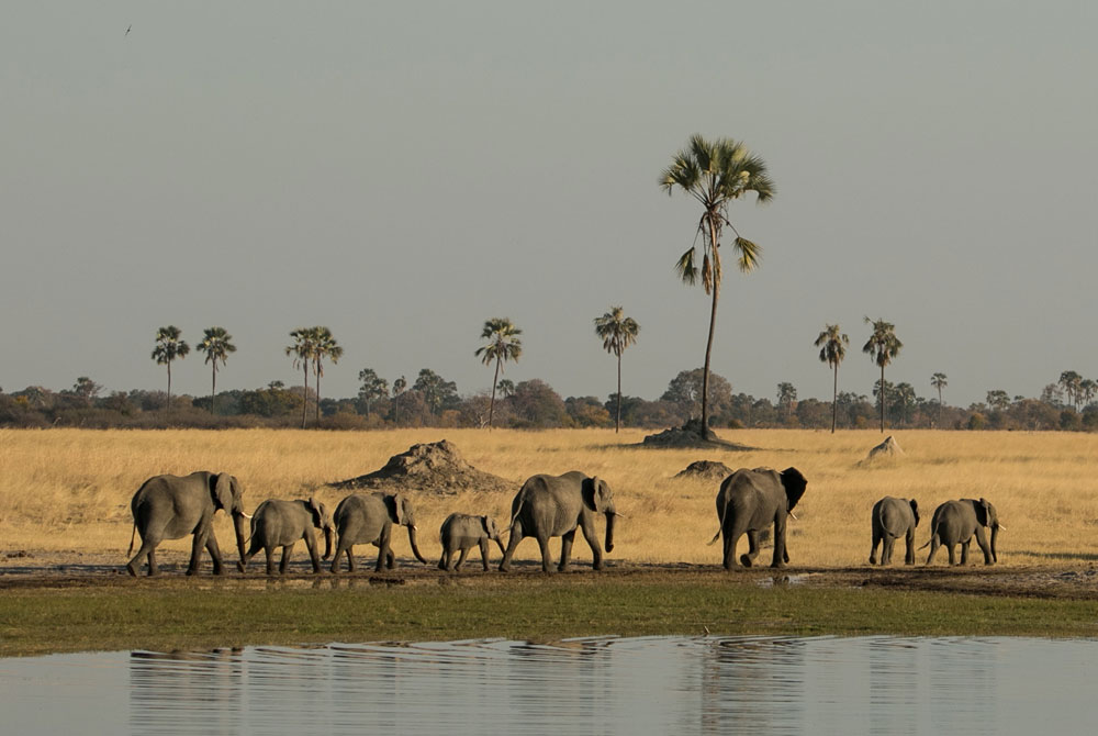A family of elephants in Hwange ©Jo Sharp