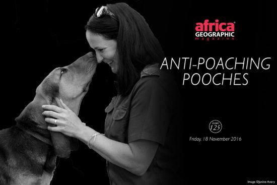 anti-poaching-pooches
