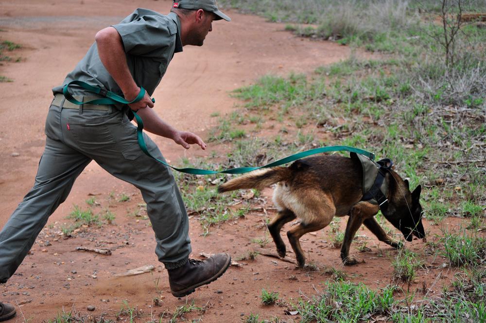 anti-poaching-tracker-dog