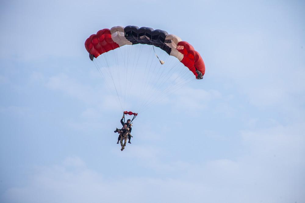 parachuting-anti-poaching-dog
