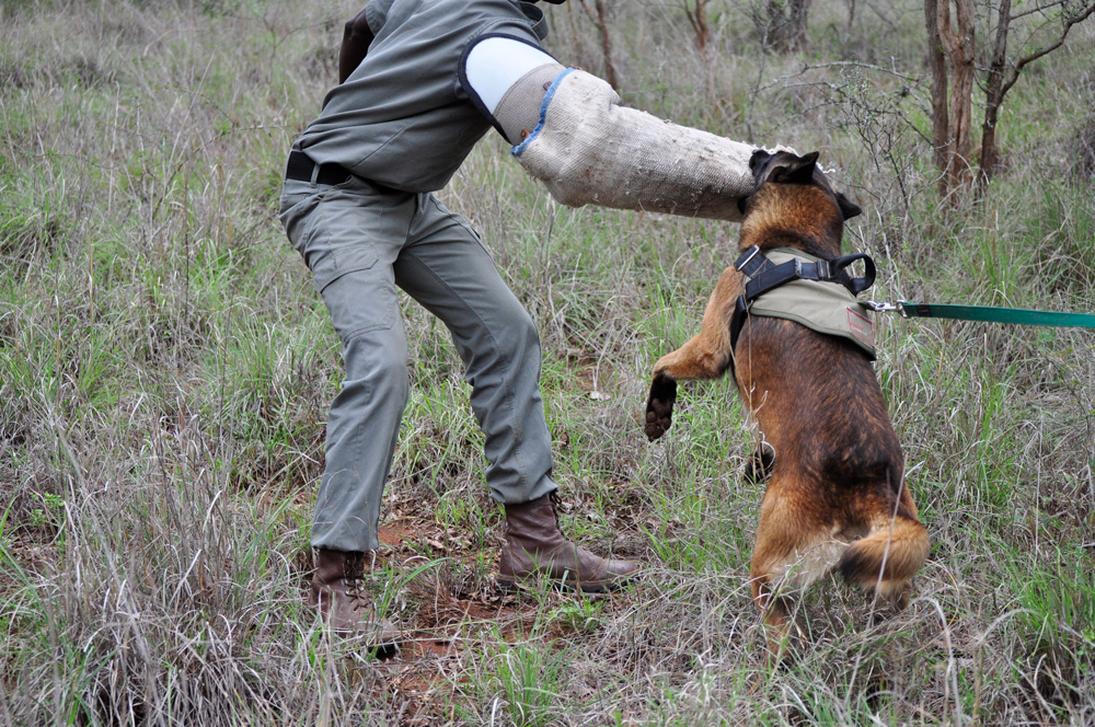 Don't mess with a Kruger attack dog ©K9 Conservation