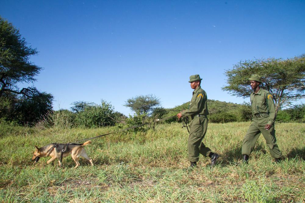 two-rangers-anti-poaching-dog