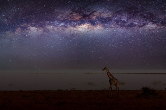 Mikkel-Beiter-Star-walk-Lake-Manyara-National-Park-Tanzania