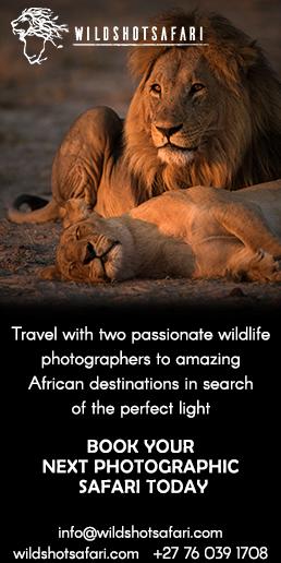 wildshot-safari