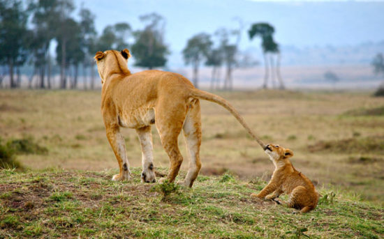 16-Maasai-Mara-Kenya-Tori-marsh