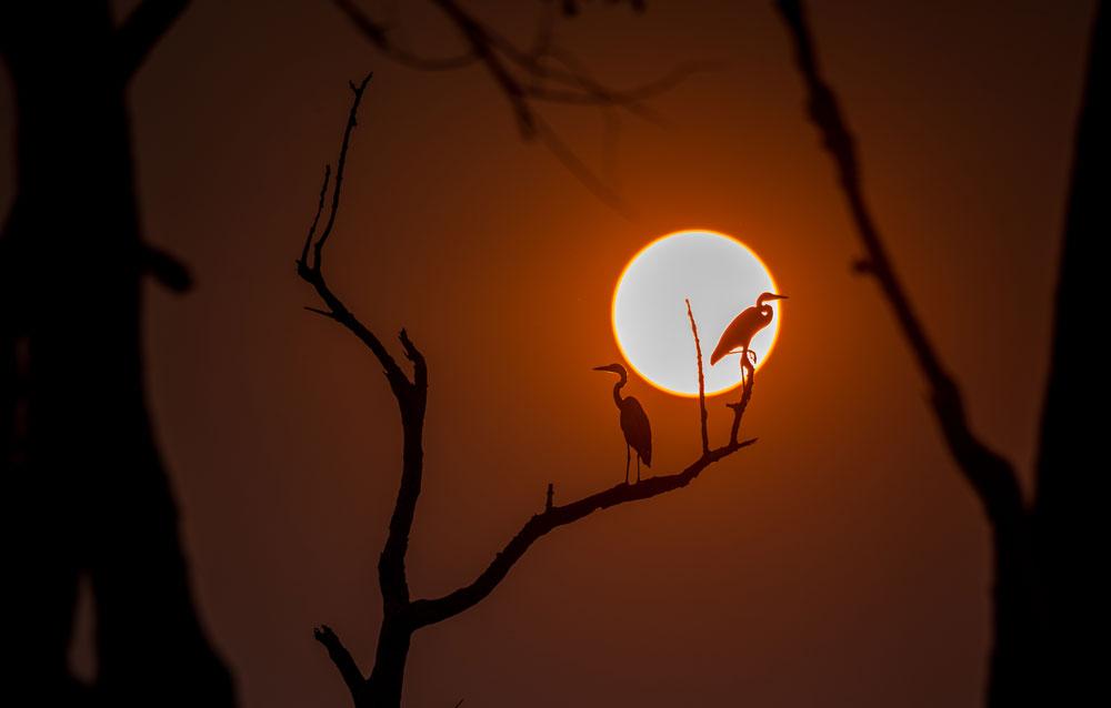 Herons greet the dawn in South Luangwa National Park © Peter Geraerdts