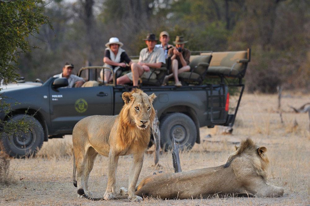 © Shenton Safaris