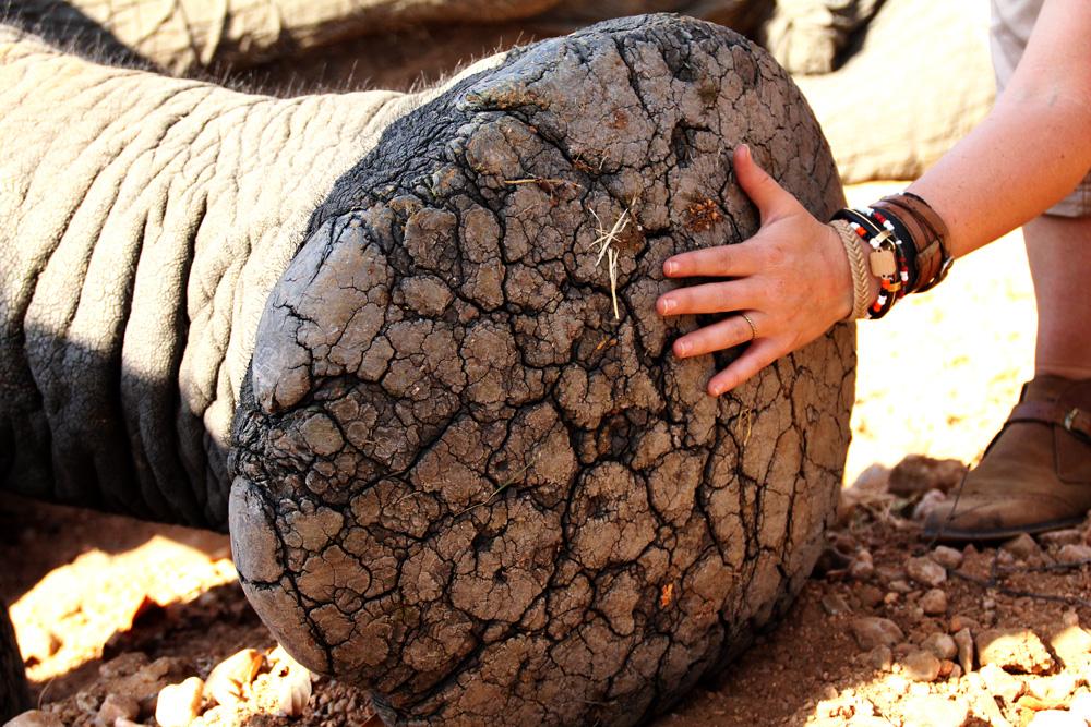 underside of an elephant foot