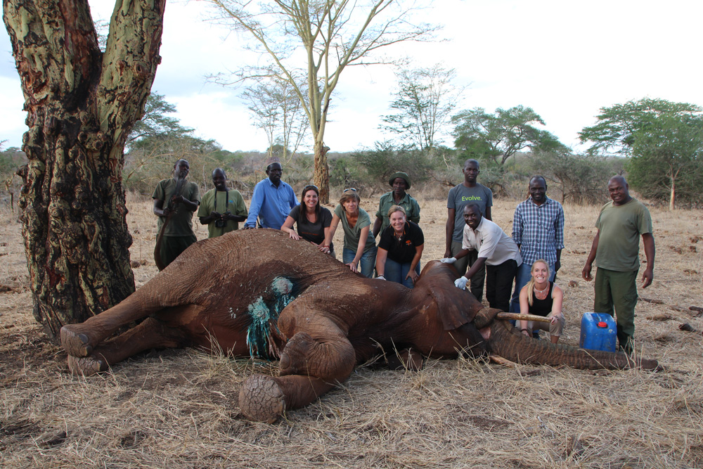 wounded elephant rescue conservation