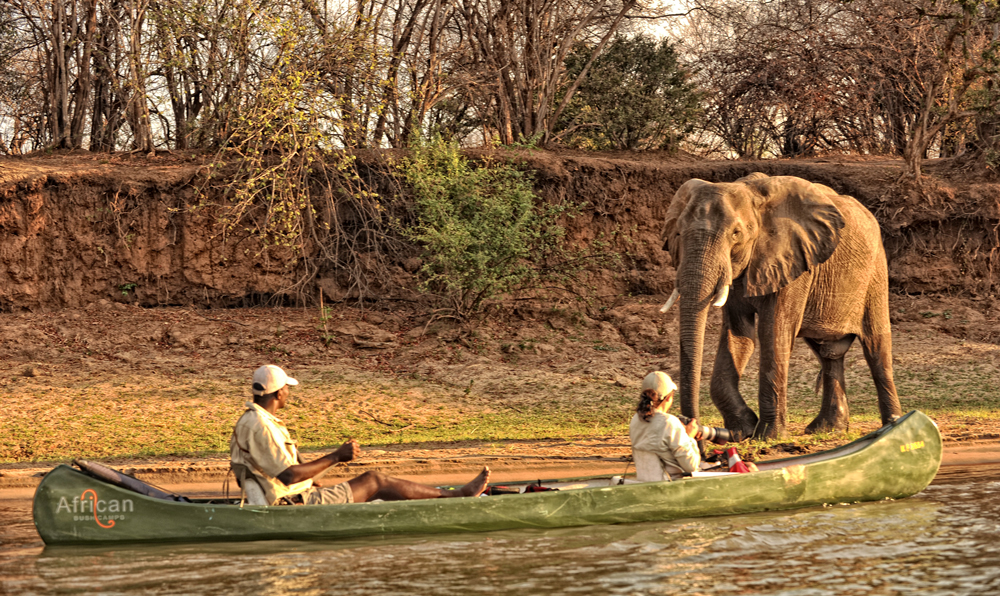 elephant-mana-pools-canoe-safari-zambezi-river
