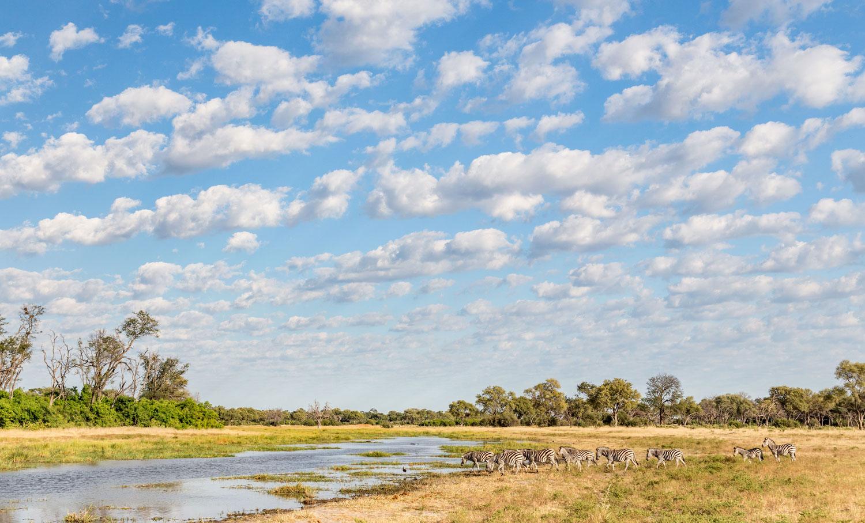 wildlife, landscape, African safari, zebra at a river, Botswana