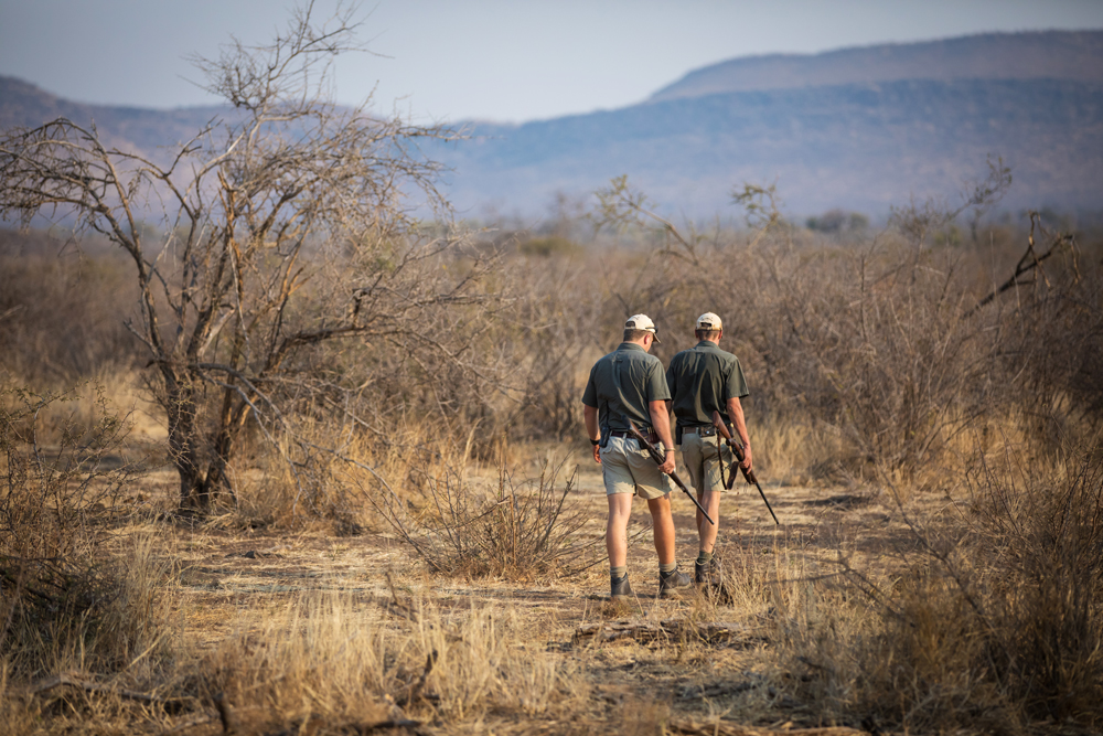 madikwe-game-reserve-south-africa-safari-travel-5 Online Form Entry Job on level hr assistant, level position, level butcher, level human resource, level no experience, level construction,