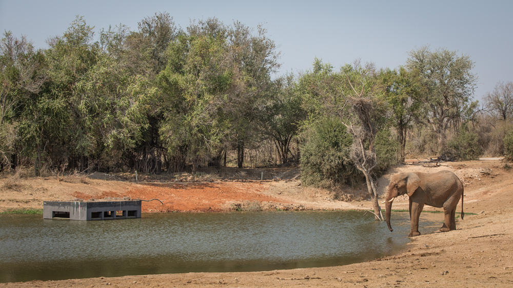 Guests watching an elephant from a hide