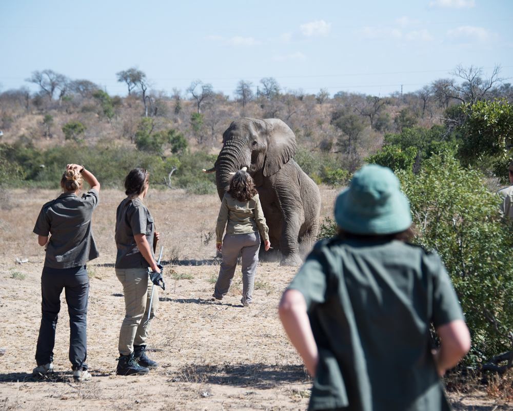 Team of people interacting with an elephant