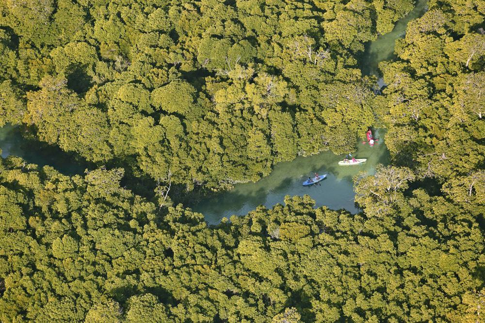 A kayaking trip through the mangrove swamps