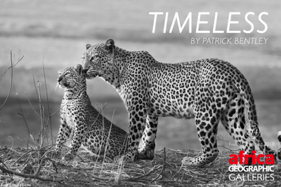 Timeless gallery by Patrick Bentley