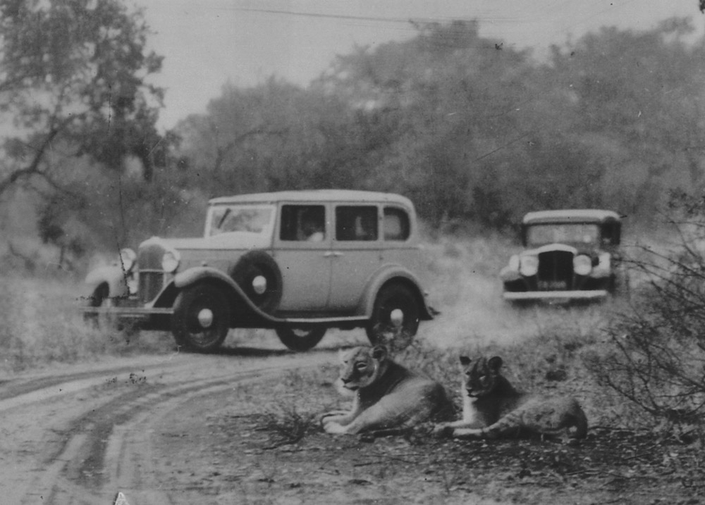 Cars and lions in Kruger National Park in 1940s