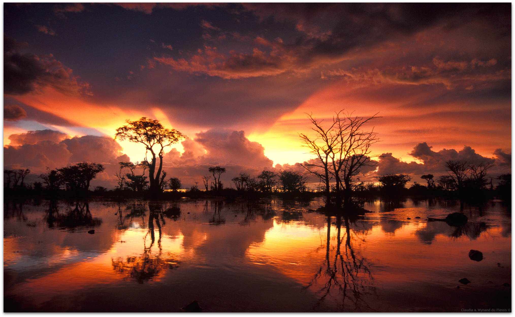 Fairy Tale Forest in the Etosha National Park