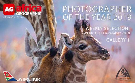 Photographer of the Year 2019 Weekly Selection: Week 3: Gallery 1