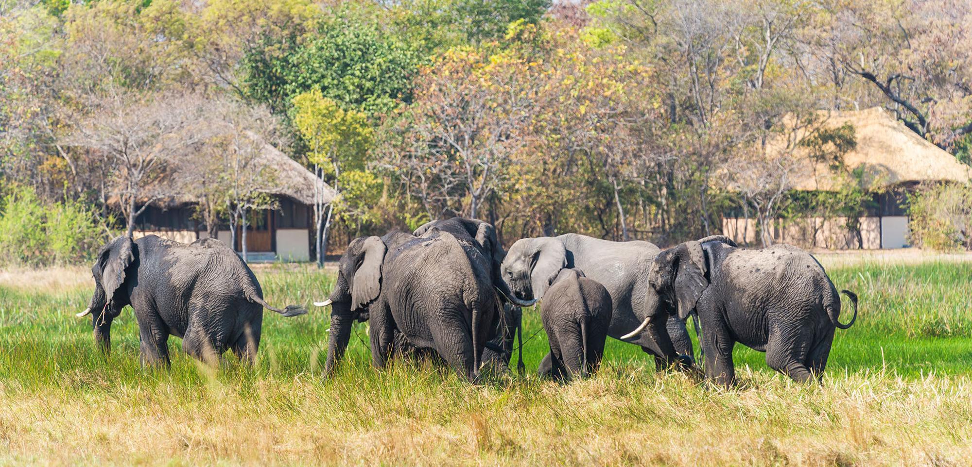 Elephant herd passing by Nanzhila Plains Safari Camp