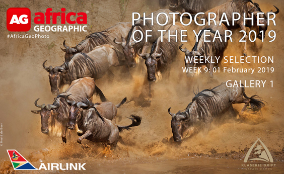 Photographer of the Year 2019 Weekly Selection Gallery