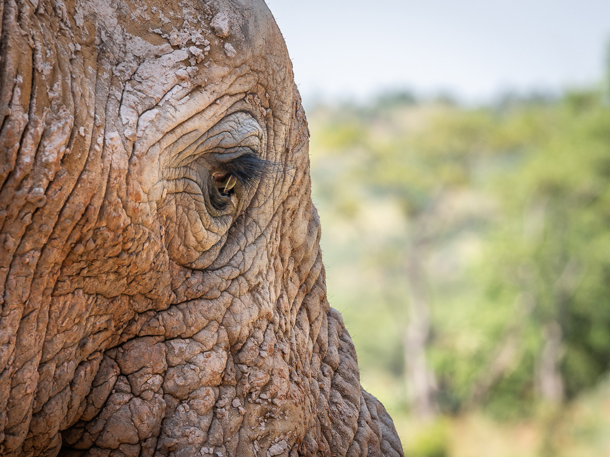 """Windows to the soul"" – close up of an eye of an elephant in Welgevonden Game Reserve, South Africa © Michael Raddall"