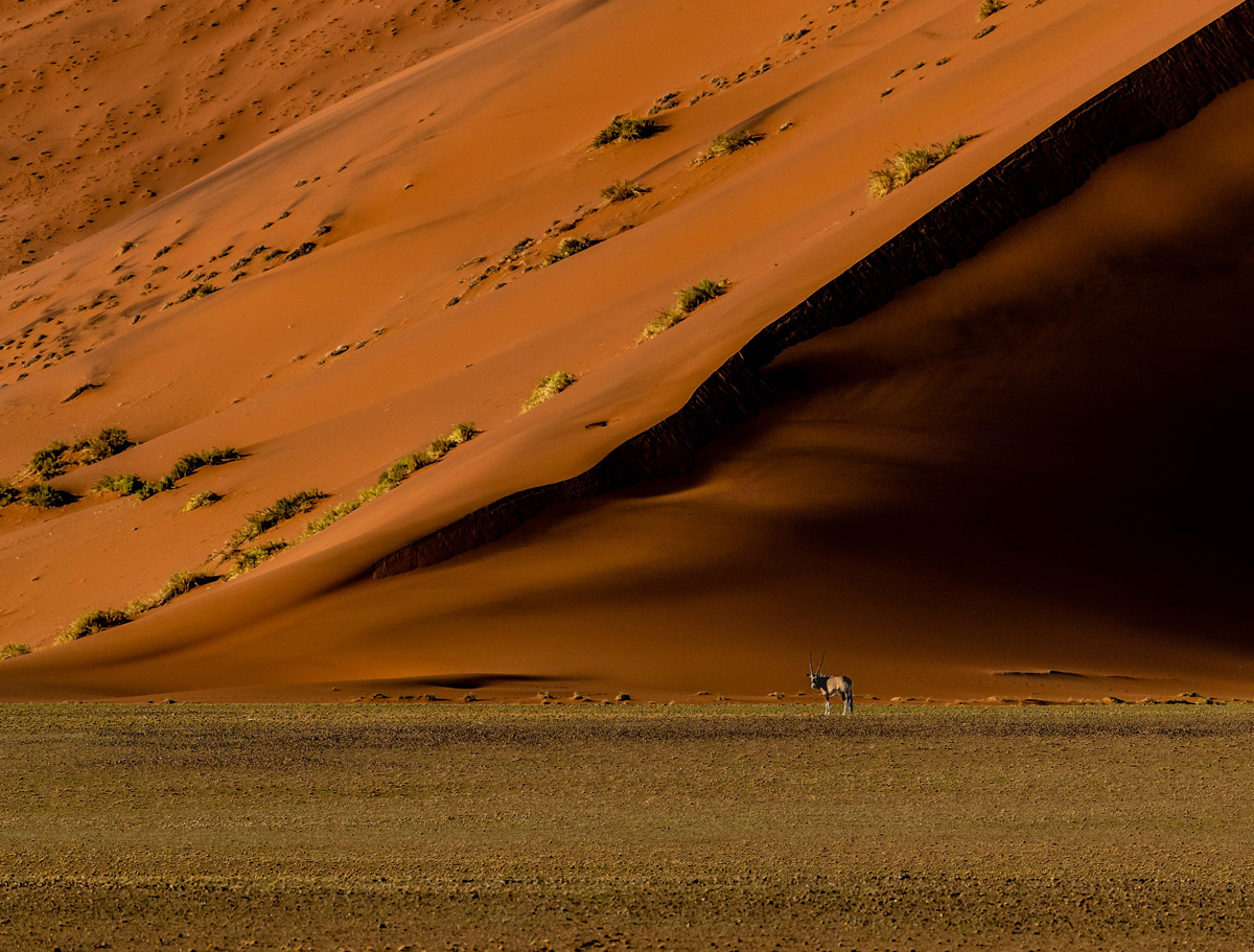 An oryx, dwarfed by a massive red sand dune, pauses to look at the humans observing it, in Namib-Naukluft Park, Namibia © Gerald Knight