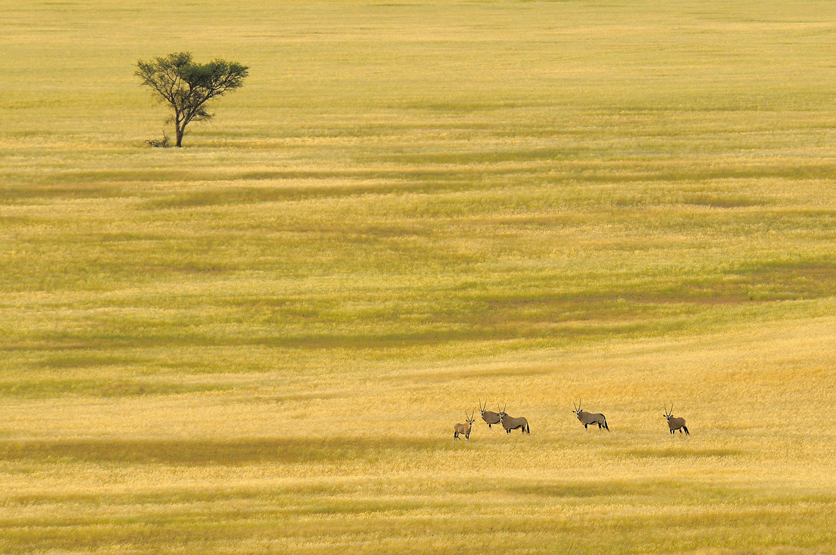 Gemsbok in a vast, open savannah in Namib-Naukluft National Park, Namibia © Vittorio Ricci