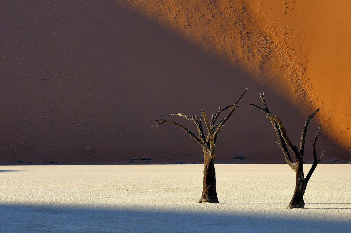 Dead trees in the early morning light, Deadvlei, Namib-Naukluft Park, Namibia © Vittorio Ricci